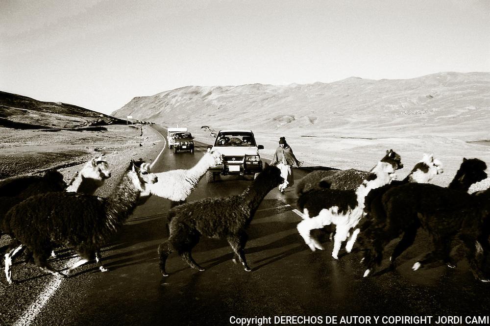 UN REBA&mdash;O DE LLAMAS Y ALPACAS  CRUZA LA CALZADA<br />  EN  CIMA DE  &quot; LA CUMBRE&quot;  A   4.725 M. PUNTO MAS ALTO DE LA CARRETRA DE LOS YUNGAS.BOLIVIA.<br /> FOTO : JORDI CAMI