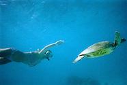 Disposable Underwater Camera Australia