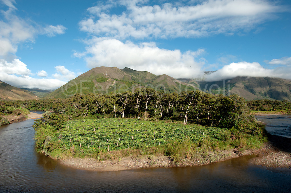 passion fruit plantation along Huancabamba river / PERU