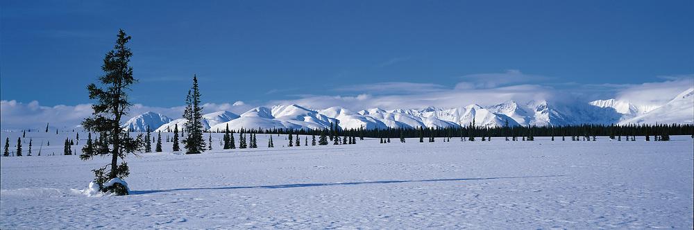 Alaska. Panoramic of the arctic snow.