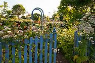 Wild flowers next to a wooden pickett fence in the Laskett Gardens, Much Birch, Herefordshire, UK