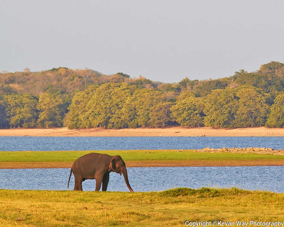 elephants gathered in Minneriya National Park at sunset