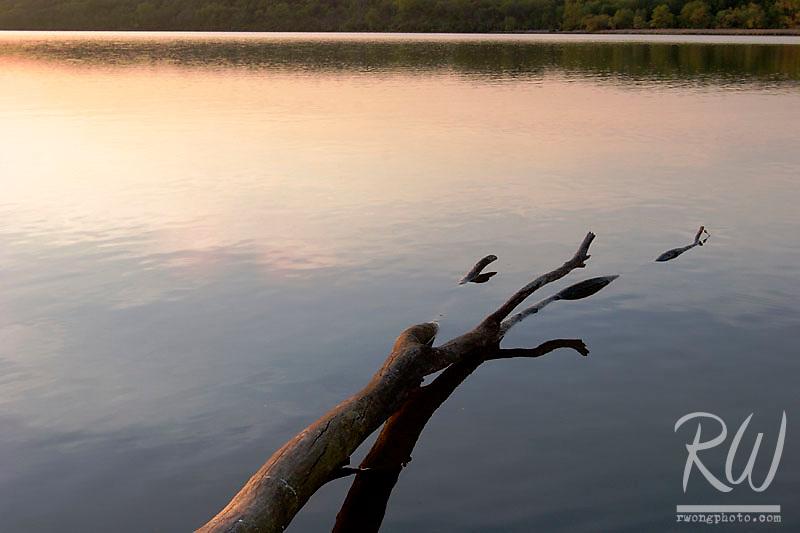 Fallen Tree, Saganashkee Slough, Willowbrook, Illinois
