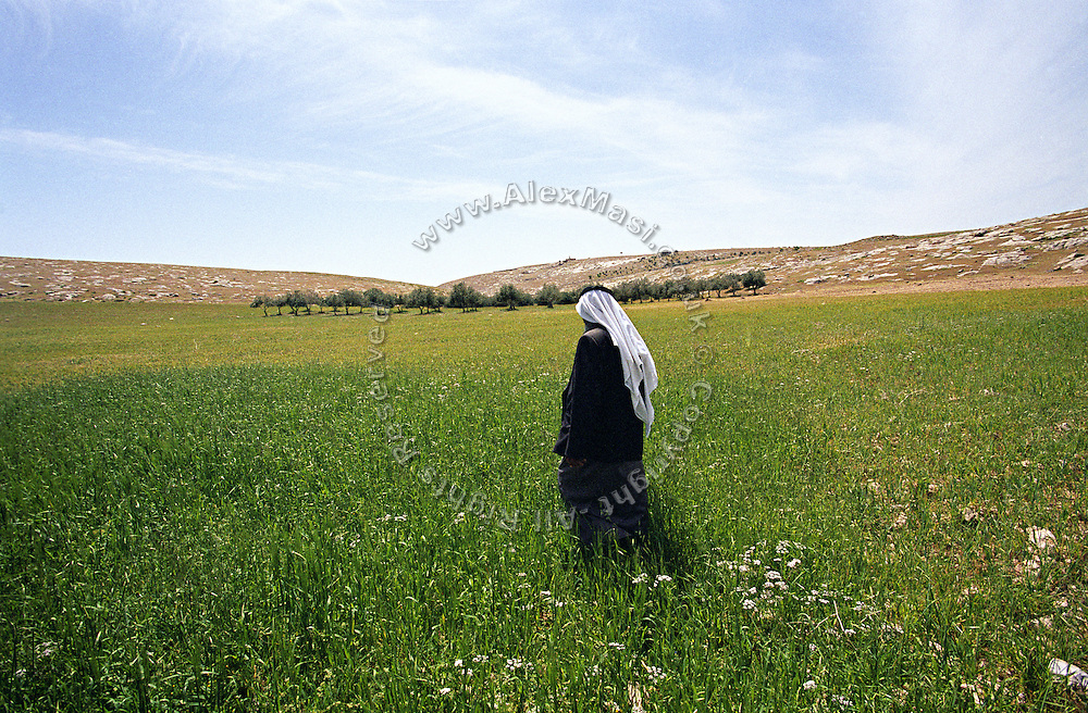 Abu Ali, a 69-years-old Bedouin man, is walking on the land leading to his olive trees in the unrecognised village of Sararat, in West Bank zone C (Israeli controlled), close to Jerusalem, the capital of the country. The Israeli government is forcing him to move from a land he lives in since 50 years. Part of the separation wall aimed at protecting the large Jewish settlements in the area has been planned to pass trough his propriety. Numbering around 200.000 in Israel, the Bedouins constitute the native ethnic group of these areas, they farm, grow wheat, olives and live in complete self sufficiency. Many of them were in these lands long before the Israeli State was created and their traditional lifestyle is now threatened by subtle Governmental policies. The seven Bedouin towns already built are all between the 10 more impoverished towns in Israel..