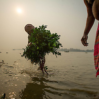 Jan 14, 2013 - Men wash greens on the shore of the Ganges or Ganga River as filler greenery for floral arrangement to be sold in the crowded streets the famed flower markets of Kolkata, India. <br /> <br /> Story Summary: It is said that the battle over global warming is to be won or lost in Asia. With growing populations and new economic boom in the global markets across Asia countries like India, Nepal and Cambodia have to grapple with the success and the environmental disaster that comes with ramped up production in unchecked or unregulated industries to compete in todays marketplace. The catastrophic air pollution makes for new problems to be dealt with such as a future health crisis, quality of life issues and the tarnished image of reduced visibility to world heritage sites for tourism.
