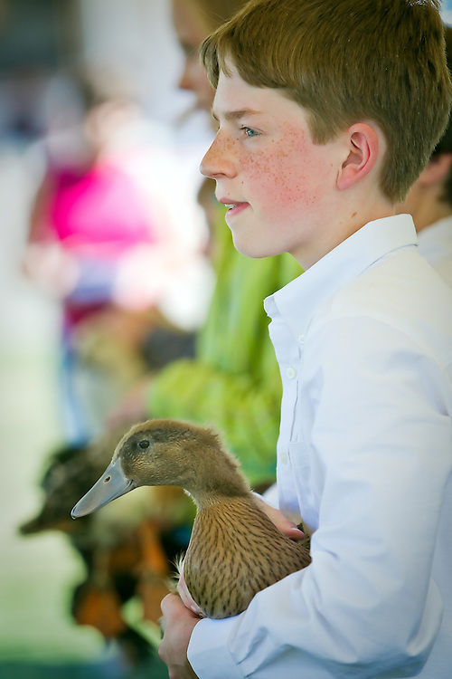 "Charlie Radavich, 13, holds his 4-month-old Khaki Cambell duck named ""Squishy"" during a 4-H judging session Wednesday."