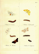 Butterfly and moths from Magazin des Thierreichs (Journal of the animal kingdom) by Reich, Gottfried Christian, 1769-1848, editor; Walther, Wolfgang, active 18th century, publisher; Leitner, Johann, engraver; Vogel, G. (Georg), 1767-approximately 1810, engraver; Volckart, Johann Friedrich, 1750-1812, engraver; Richmond, Charles Wallace, 1868-1932, former owner. DSI; Carus, Julius Victor, 1823-1903, former owner. DSI  Published in Germany 1793-1795
