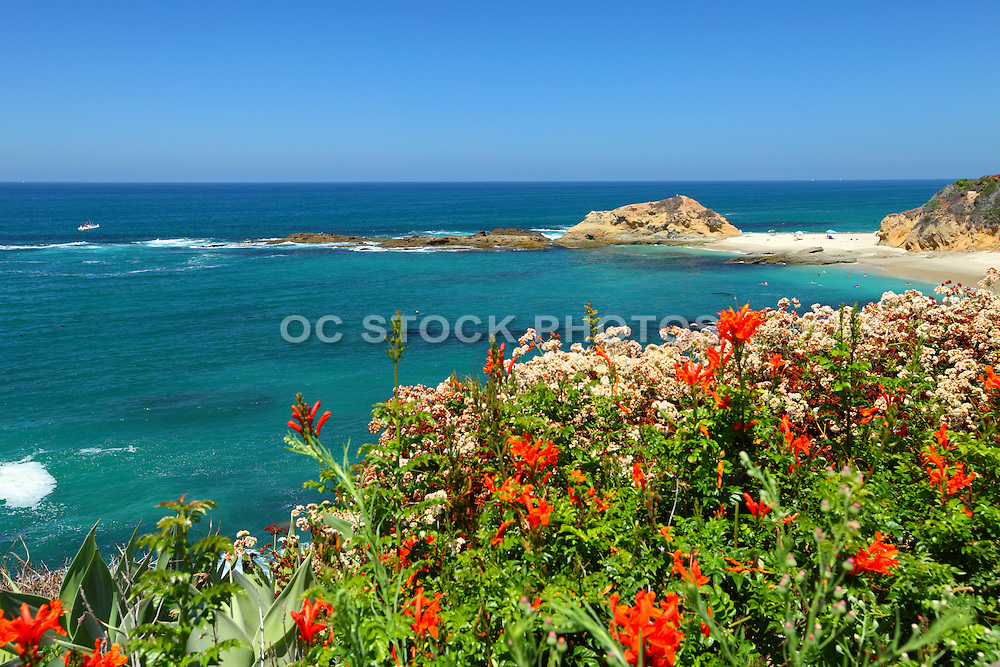 Coastal Landscape In Laguna Beach California