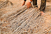 """08 APRIL 2010 - NAKHON PHANOM, THAILAND: KUMHOON, a rice farmer in Nakhon Phanom province of Thailand, collects rice straw from his paddies. He will use the straw to feed livestock and as a bed for mushrooms he plans to plant. He said he doesn't know why the Mekong River is so low and why the region is gripped by drought. He said he heard on TV and in newspapers that """"global warming"""" may be to blame, but that he doesn't understand what global warming is. He said he tried to grow potatoes because they use less water but he couldn't sell them in the local markets. The region is in the midst of a record setting drought and the Mekong River is at its lowest point in nearly 50 years, setting up an environmental disaster the region has never seen before. Many of the people who live along the river farm and fish. They claim their crops yields are greatly reduced and that many days they return from fishing with empty nets. The river is so shallow now that fisherman who used to go out in boats now work from the banks and sandbars on foot or wade into the river. In addition to low river levels the Isan region of Thailand is also in the midst of a record drought and heat wave. Farmers have been encouraged to switch from rice to less water intensive crops and to expect lower yields. Farmers here rely more on rain fall than irrigation to water their crops.       PHOTO BY JACK KURTZ"""