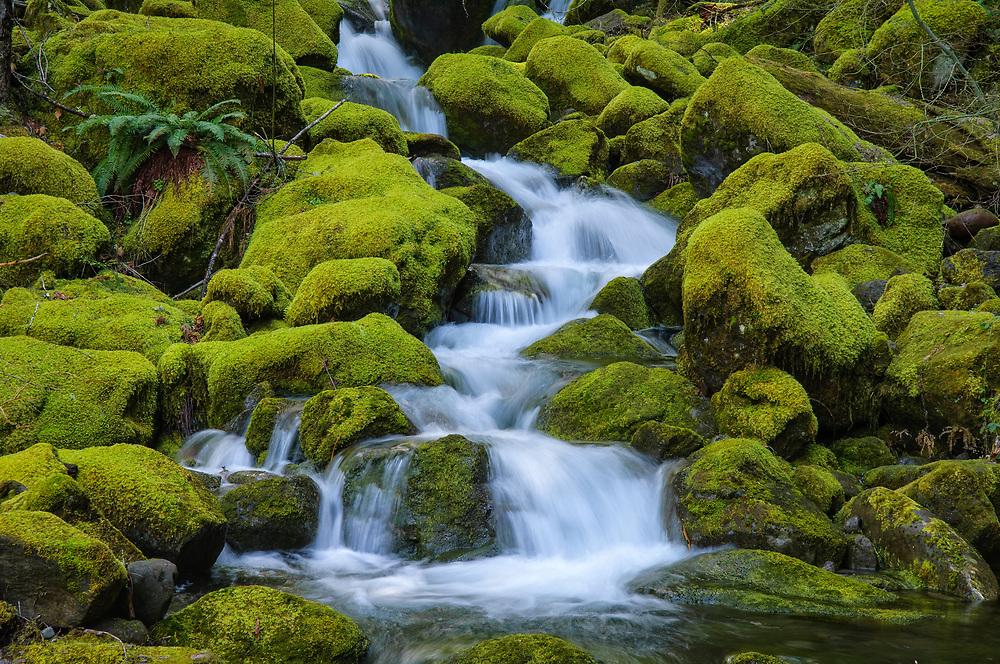 Waterfalls on Scott Creek, Willamette National Forest, Cascade Mountains, Oregon.