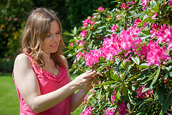 Removing flower buds on a rhododendron that has bud blast