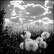 Serie: DIARIOS VISUALES / VISUAL DIARIES<br /> Photography by Aaron Sosa<br /> Polonia 2008<br /> (Copyright © Aaron Sosa)