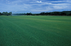 Canterbury, NH.  Irrigating a sod field.  Gold Star Farm, Canterbury, New Hampshire.