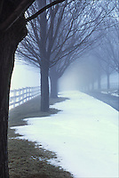 Picture of a tree line country lane in the snow and fog.