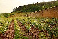 .vineyards of Jean-Marie Fourrier in Gevrey-Chambertin, , Burgundy..Photo by Owen Franken for the NY Times..May 27, 2008.