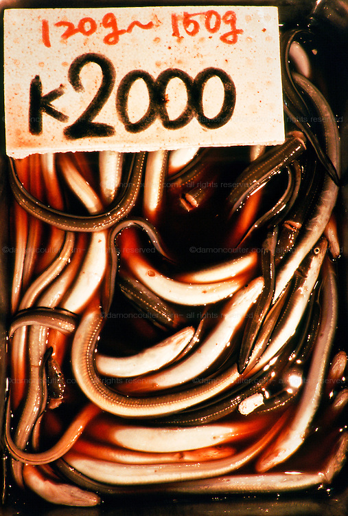 A detail image of a tray of eels for sale with price lavel at top in  Tsukiji Wholesale fish market n Tokyo, Japan. April 21st 2006
