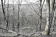 Shawnee Lookout
