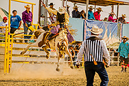 Saddle Bronc, Crow Fair Rodeo, Crow Indian Reservation, Montana, Tyrell Old Coyote riding War Hawk