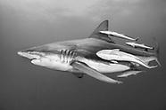 Underwater Monochrome