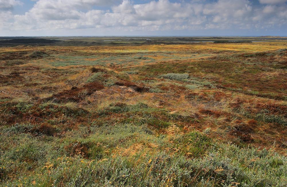 Hanstholm Vildtreservat -  National Park Thy, Denmark