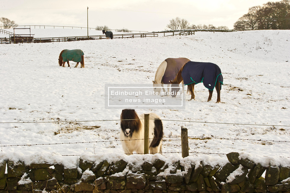 Pictured: A shetland pony, on Scotstonrig Farm outside Broughton,  foregoes a horse blanket due to their thick coat.<br /> <br /> <br /> <br /> Ger Harley | EEm 29 December 2017