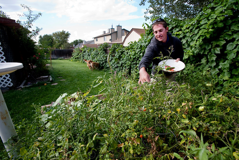 Bob Sorensen, a golf course assistant superintendent, picks vegetables in his backyard garden at his home in Grand Junction, Colorado. (From the book What I Eat: Around the World in 80 Diets.) The caloric value of his day's worth of food on a day in the month of September was 3,600 kcals. He is 25 years of age; 5 feet,  11 inches tall and 175 pounds. Switching career paths from criminal justice to turf maintenance enabled Bob to escape a desk job and work outdoors in a picturesque Western landscape. Some of his work is physical, but technology makes his irrigation chores easier. From one of many rock outcrops overlooking the lush fairways and greens in the dry, high desert valley, he can control a matrix of sprinklers with a single radio controller. MODEL RELEASED.