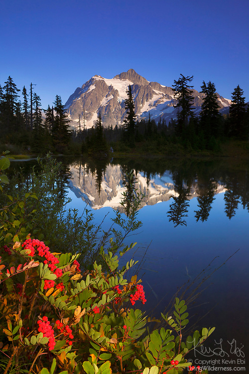 Mount Shuksan reflects on the still waters of Highwood Lake, which is lined by colorful American mountain ash (Sorbus americana). Mount Shuksan, one of the most photographed mountains, is located in Washington's North Cascades. Berries of the American mountain ash remain on the tree all winter, an important source of food for birds.