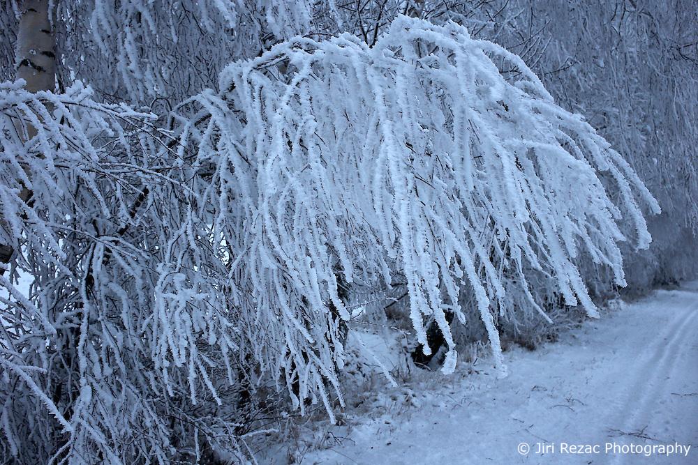 CZECH REPUBLIC VYSOCINA NEDVEZI 22DEC16 - Winter landscape with frozen fog on trees near the village of Nedvezi, Czech Republic.<br /> <br /> jre/Photo by Jiri Rezac<br /> <br /> © Jiri Rezac 2016