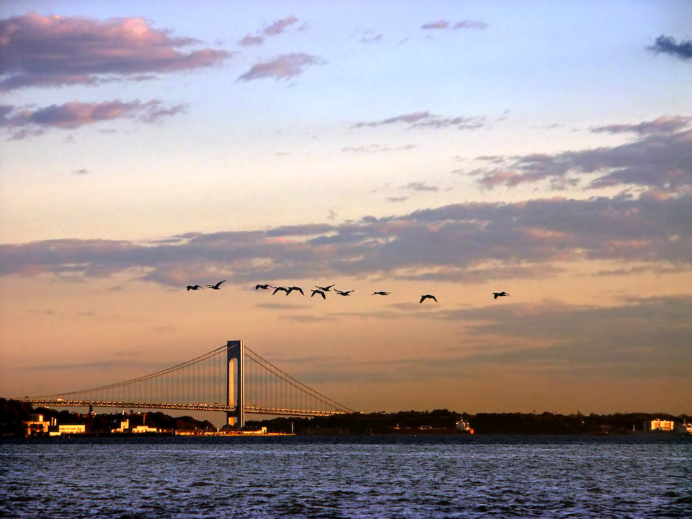 Flock of geese. Probably headed for Jamaica Bay.