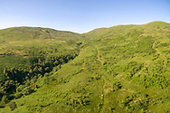 Woodland restoration at the Borders Forest Trust Corehead site in the Scottish Borders.