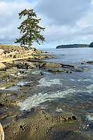 Driftwood and rock formations on the shore at Drumbeg Provincial Park Gabriola British Columbia Canada
