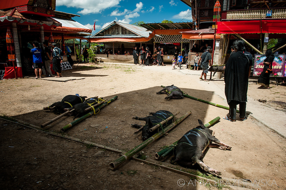 Indonesia, Sulawesi. Receiving - the day when funeral guests arrive to attend a ceremony in Tana Toraja.<br />