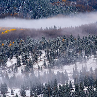 Snow covered trees in mist, Colorado