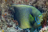 Indian Ocean Underwater - South Africa
