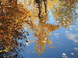 Germany, Sankt Peter  (Black Forest) - November 11, 2018.Pond with reflections of surrounding trees in autumn.Autumn landscape with fall colored leaves in a little lake. (Credit Image: © Antonio Pisacreta/Ropi via ZUMA Press)