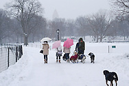 Dog walker and girls with Pink umbrellas in the snow at the Great Lawn in Central Park