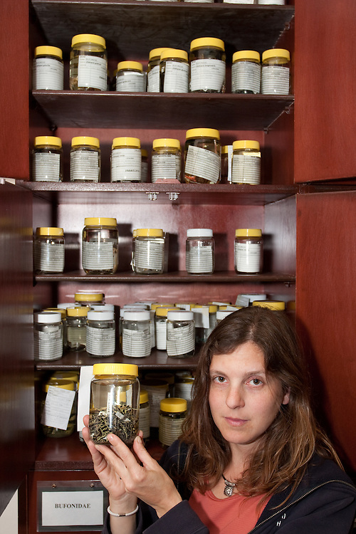 Dead frogs preserved in jars of formaldehyde