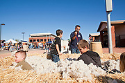28 JANUARY 2012 - BUCKEYE, AZ:    Children play in unprocessed cotton after the Buckeye Days parade. Cotton in one of the chief crops grown around Buckeye. The Buckeye Days parade went through downtown Buckeye, AZ, an agricultural community about 45 miles west of Phoenix. The parade was one the first events to mark Arizona's centennial celebration. Arizona was admitted to the United States on Feb 14, 1912, making it the 48th state in the union. The state celebrates its 100th birthday with a series of events on Feb. 14, 2012.    PHOTO BY JACK KURTZ