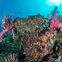 Healthy corals, Komodo Island, Indonesia.
