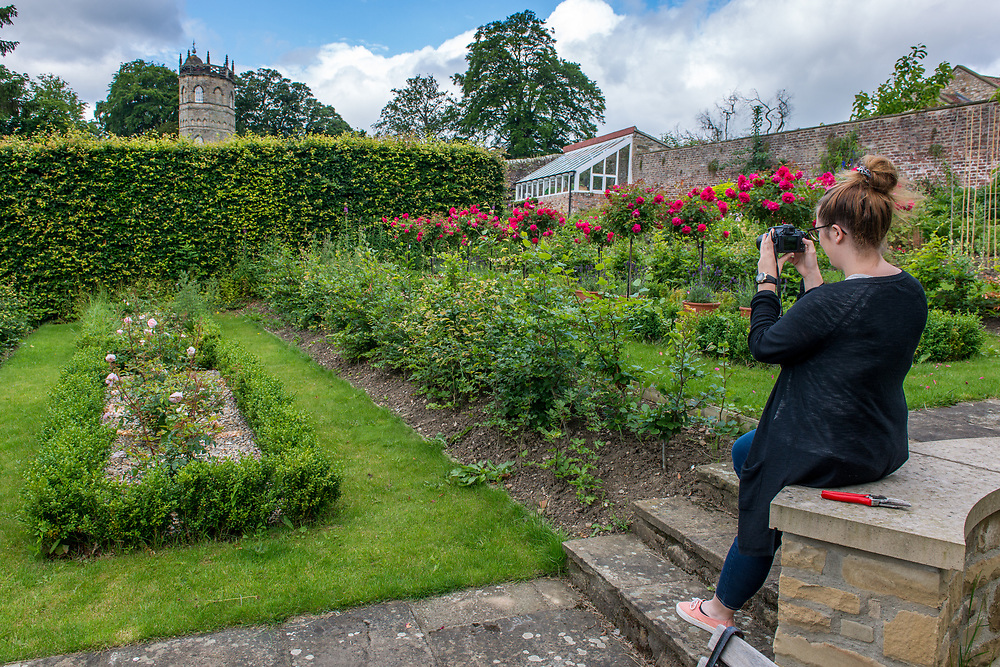 Young female photographer takes photos in garden, Richmond, Yorkshire, England