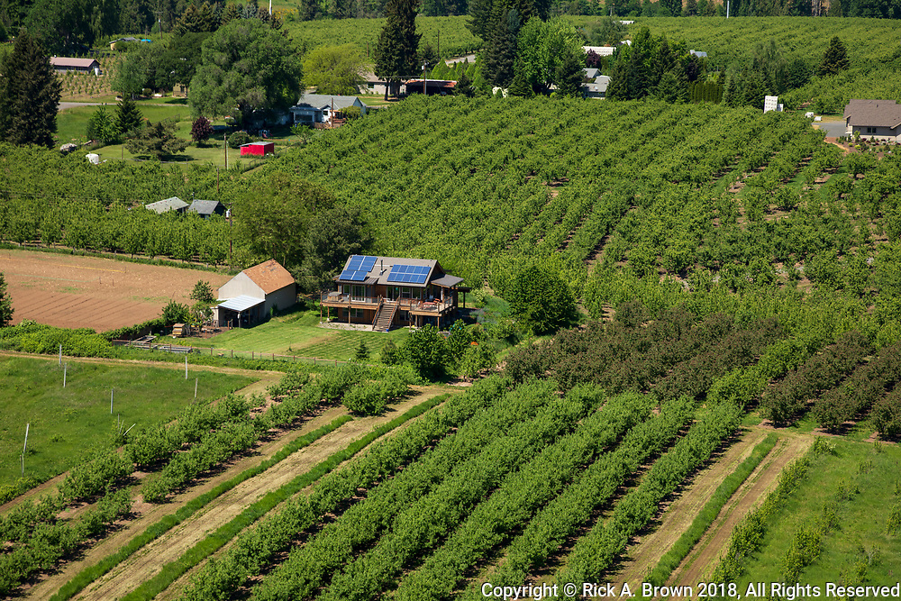 Orchard in the Hood River Valley from the air.