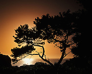 Tree silhouetted at sunset, Patrick's Point State Park, near Eureka, California