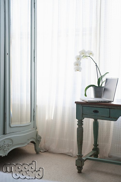 Orchid and laptop on table at window