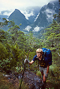 A tramper (hiker) ascends muddy beech forest above Tripod Hill towards Centre Pass, on the Dusky Sound Track, Fiordland National Park, South Island, New Zealand. In 1990, UNESCO honored Te Wahipounamu – South West New Zealand as a World Heritage Area.