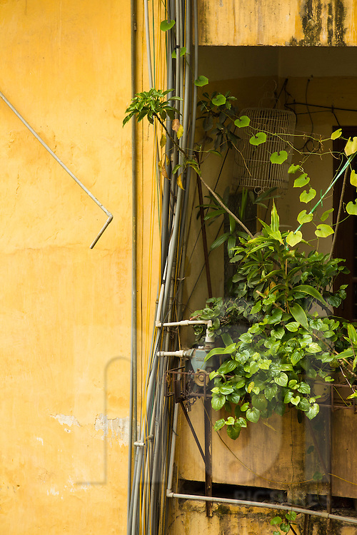 "Bunch of messy PVC plumbing, electric wires and green plants hooked on a yellow wall in a "" khu thap the"" (KTT) building, an architecture style housing famous in Vietnam. Hanoi, Vietnam, Asia."