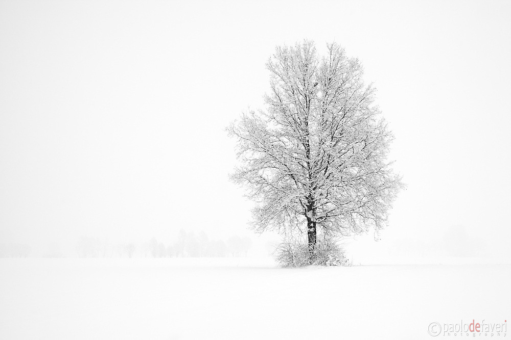 Snow in the ground and hazy atmosphere are just the best conditions for highly graphical and minimalist photos such as this one. I took this picture in the fields around my home town of Scalenghe in Piedmont, Italy, on a cold morning at the beginning of January, under a heavy snowfall.
