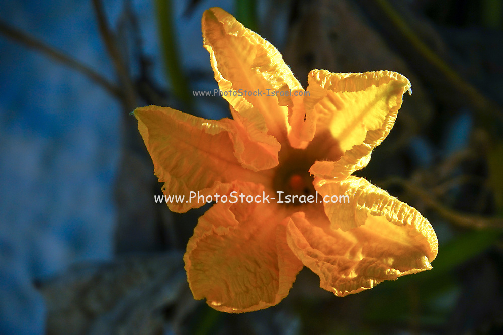 closeup of a flower with orange petals