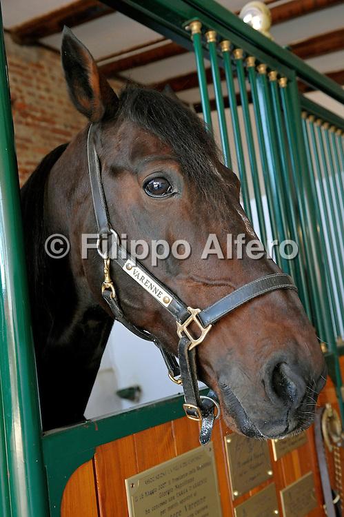 &copy; Filippo Alfero<br /> Vigone (TO), 17/11/2008<br /> sport varie<br /> Lo stallone Varenne presso l'allevamento &quot;Il Grifone&quot; di Vigone<br /> Nella foto: Varenne<br /> <br /> &copy; Filippo Alfero<br /> Vigone, Turin, Italy, 17/11/2008<br /> sport<br /> The stallion Varenne at the farm &quot;Il Grifone&quot;<br /> In the photo: Varenne