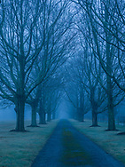Driveway, Trees, East Marion, Long Island, New York