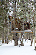 A large treehouse in a snow-covered forest, Bar Harbor, Maine.